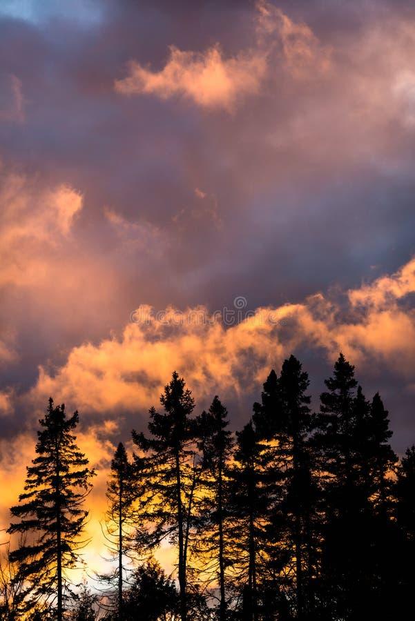 Treeline现出了轮廓反对剧烈的日落 库存照片