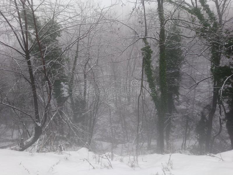 Treeline雪冬天雾 库存照片