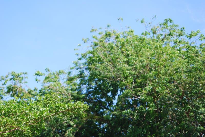 treeline στοκ φωτογραφία