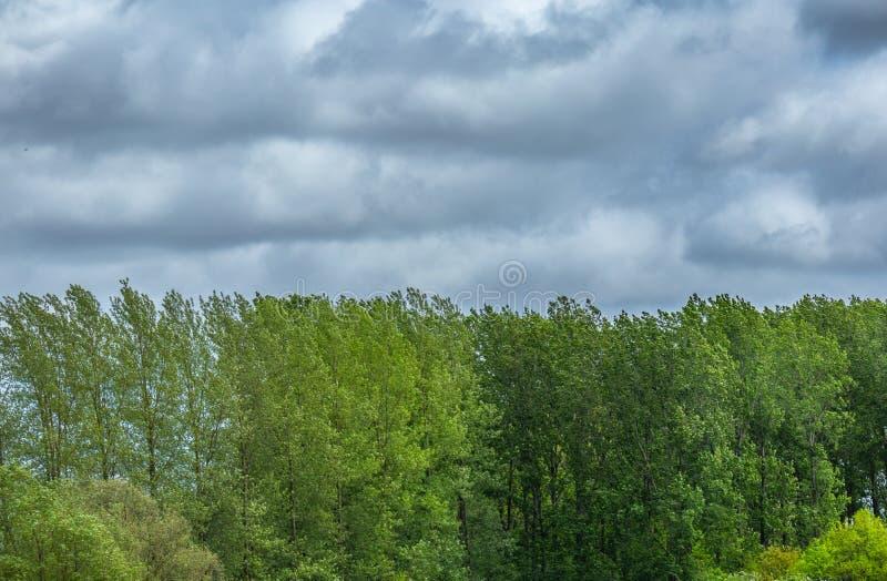Treeline с облаками шторма стоковое фото rf