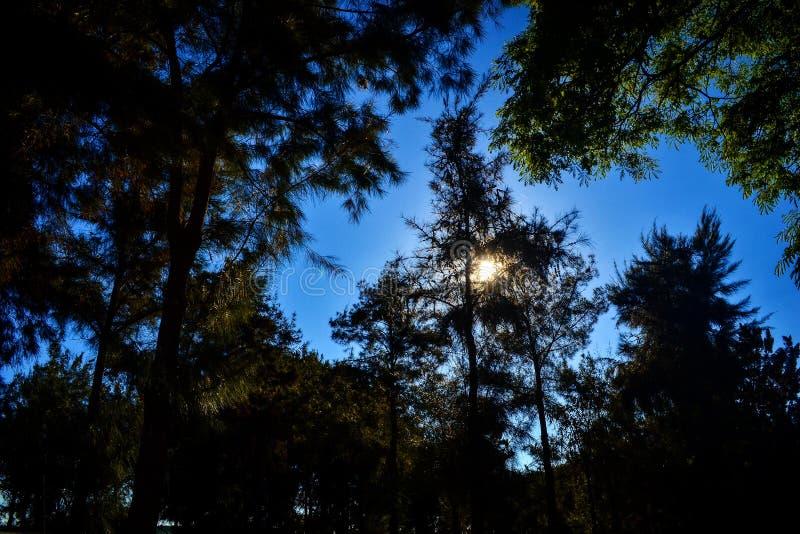 treeline стоковая фотография rf