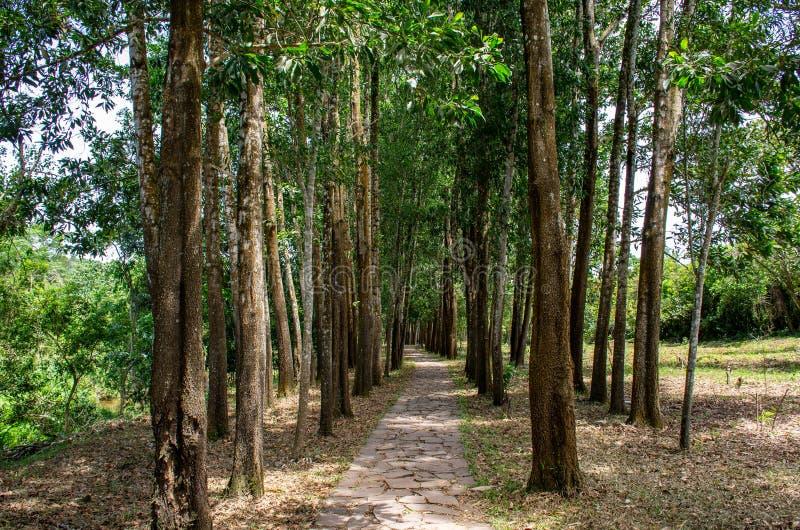 treeline στοκ φωτογραφίες με δικαίωμα ελεύθερης χρήσης