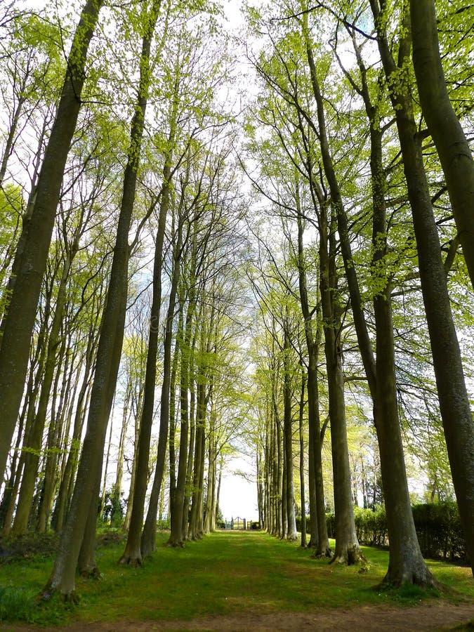 treeline stock fotografie