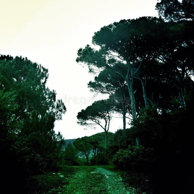 Treeline dans la forêt photo stock