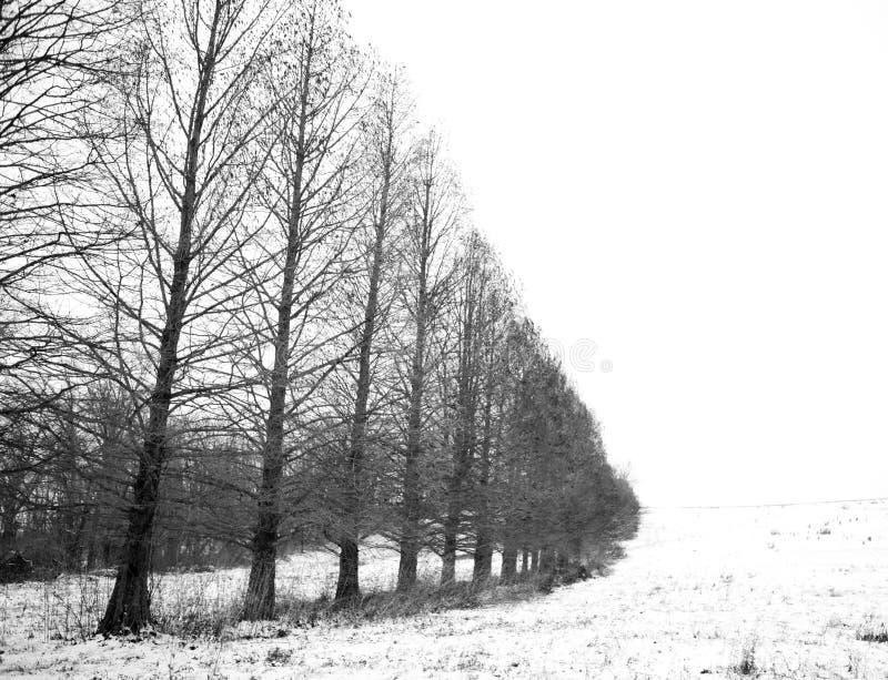 Treeline in de sneeuw stock foto's