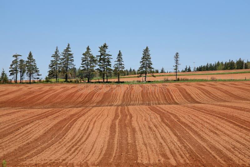 Treeline do fazendeiro foto de stock