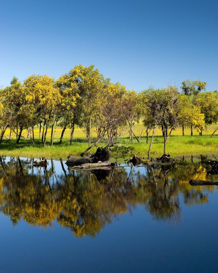 Download Treeline reflectin on lake stock photo. Image of reflection - 11433192
