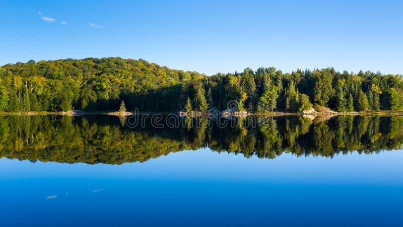 Treeline verde vibrante e reflex?o imagem de stock royalty free