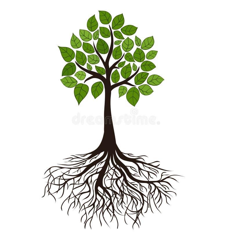 Treen med rotar stock illustrationer