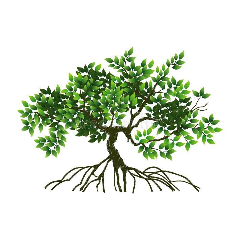 Treen och rotar vektor illustrationer