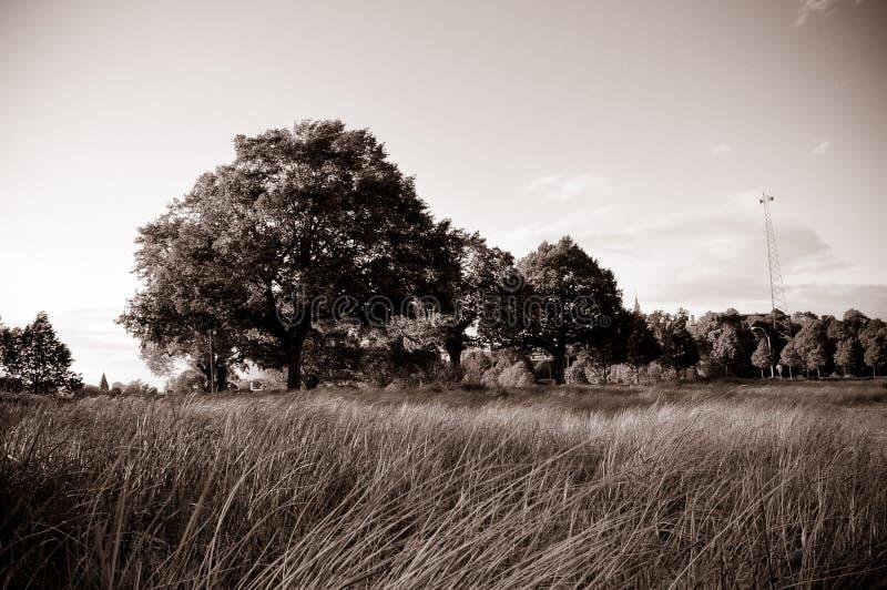 Treen sätter in in arkivfoton