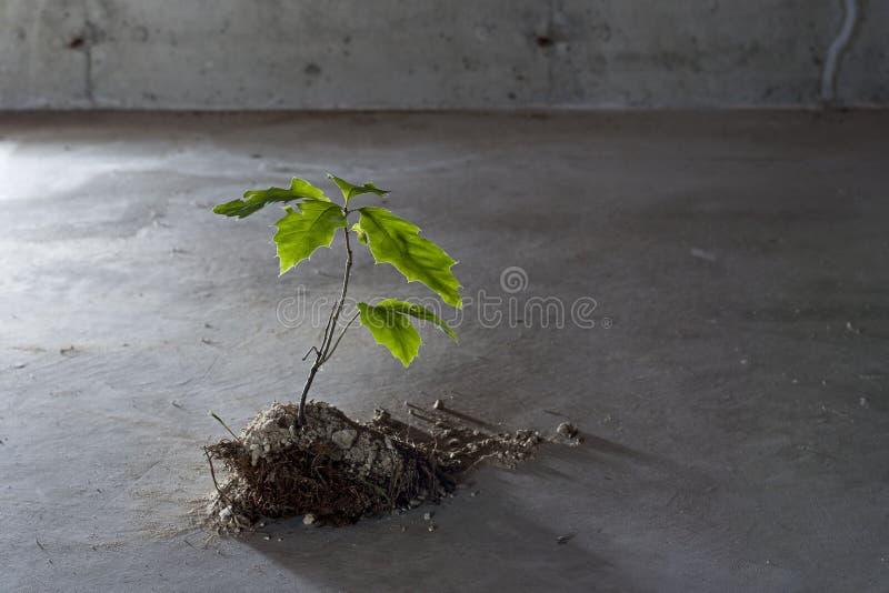 Treen växer från betong royaltyfria foton