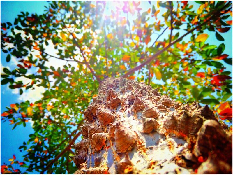 TreePortrait 免版税图库摄影