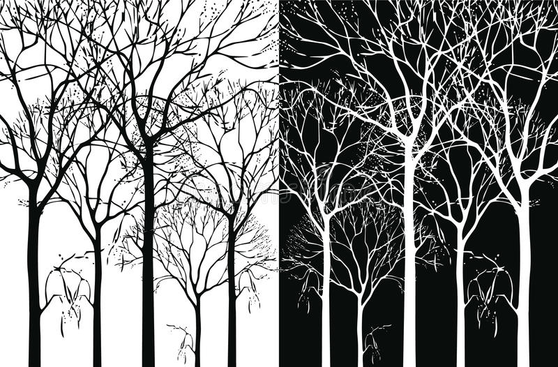 Download Trees stock vector. Illustration of white, image, sketch - 13796744