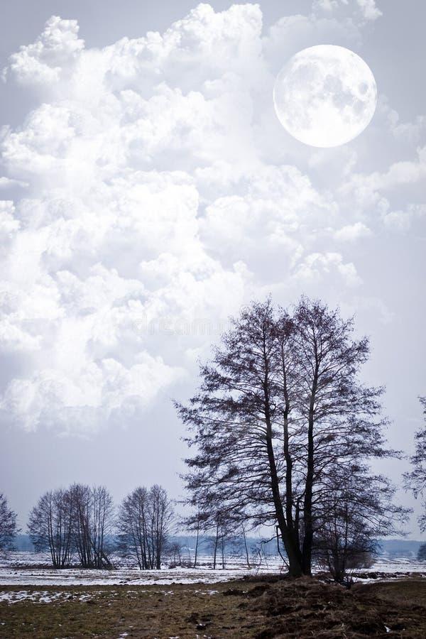 Free Trees Stock Photos - 17942633