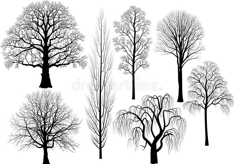 Trees. Collection of trees in black - oak, birch, aspen, poplar, beech, willow, lime - vector illustration