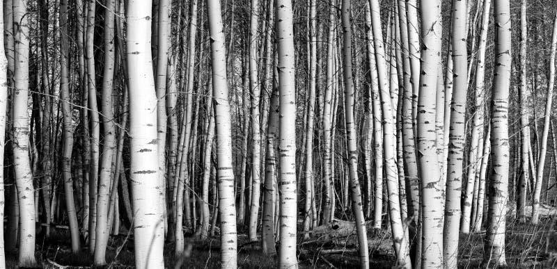 trees royaltyfri foto