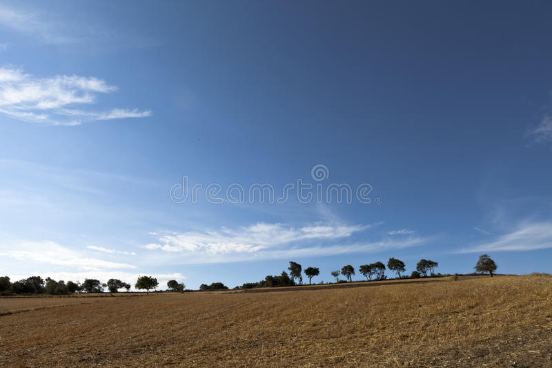 Download Trees stock photo. Image of daylight, sunny, cloudy, trees - 26236894