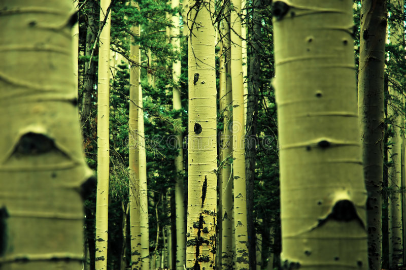 Download Trees stock image. Image of trees, white, green, forrest - 2768523