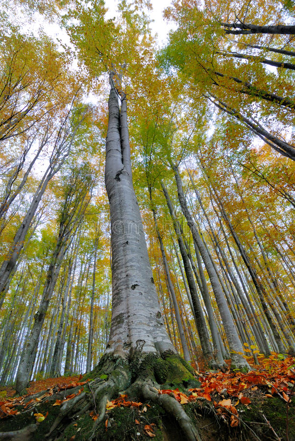 Download Trees stock image. Image of banja, photo, serbia, vrnjacka - 28195451
