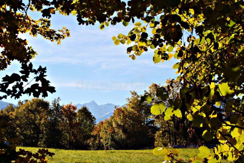 Download Trees arkivfoto. Bild av green, oklarheter, landskap, utomhus - 282720