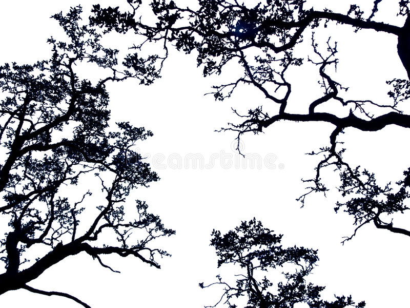 Trees stock photography