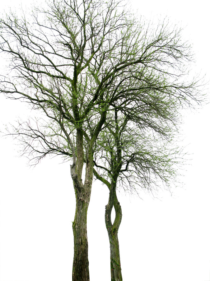 Download Trees Stock Image - Image: 5950301