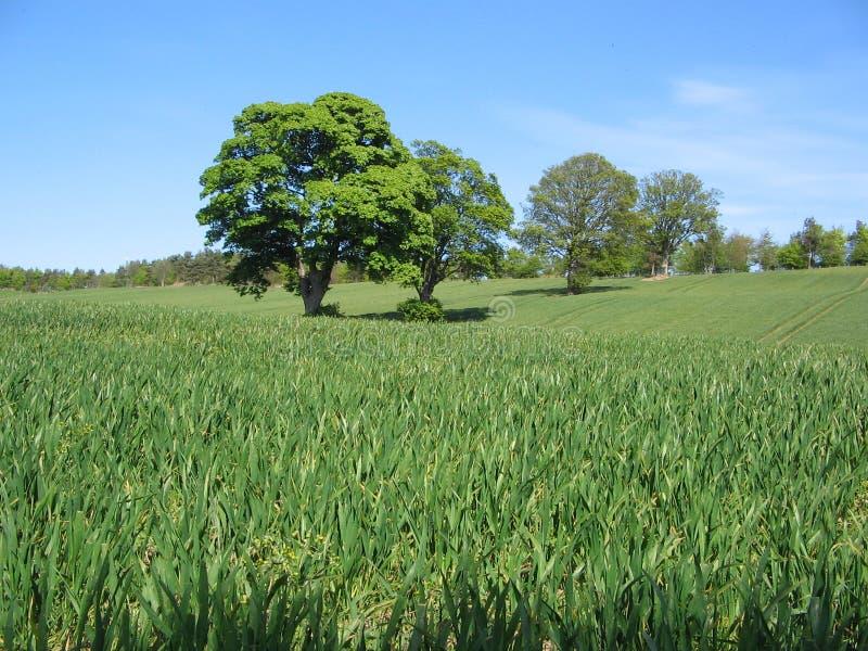 Trees stock photos