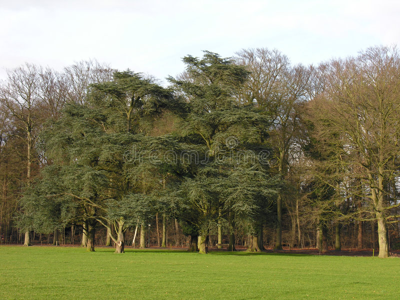 Download Trees Royalty Free Stock Photography - Image: 70617
