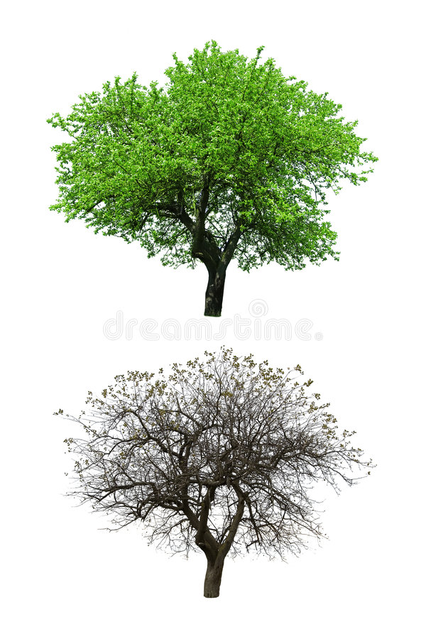 Trees stock photo