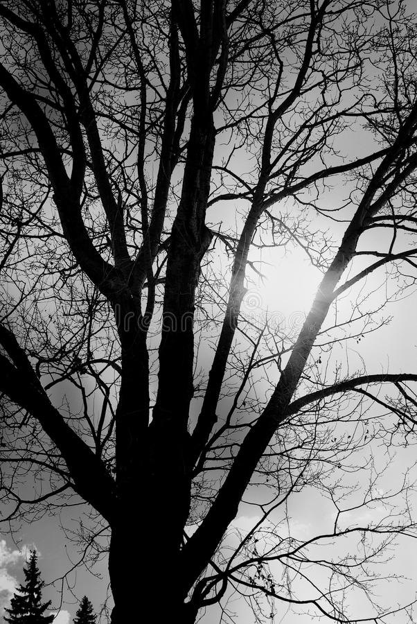 Trees. Abstract black and white photo. royalty free stock image