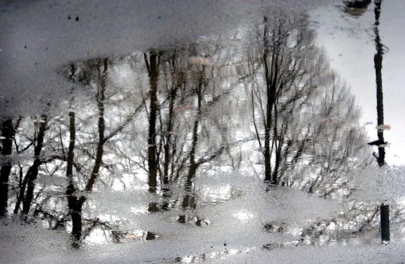 Trees. Abstract photo. royalty free stock photos