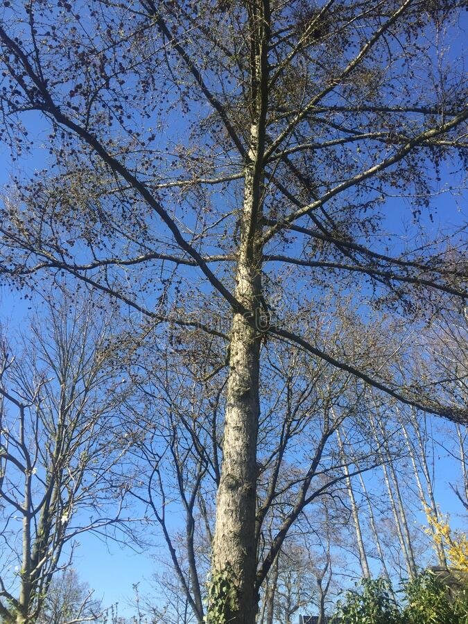 Trees against a blue sky royalty free stock photography
