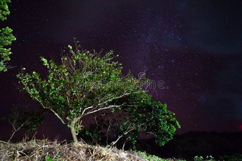 Trees against the night sky in the Philippines stock photography