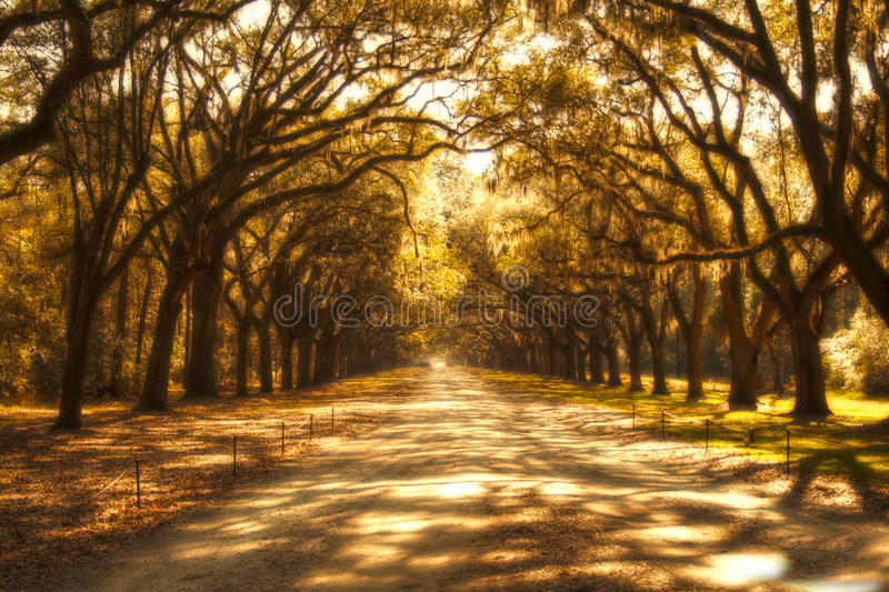Download Trees Aglow In A Southern Plantation Stock Photo - Image: 27965410