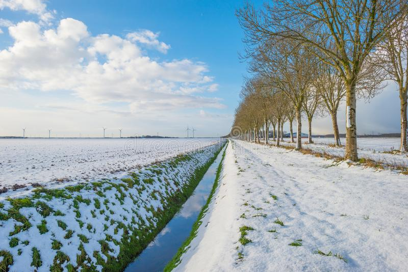 Trees along a snowy field in sunlight stock photos