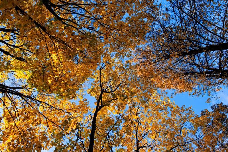 Trees&sky imagem de stock