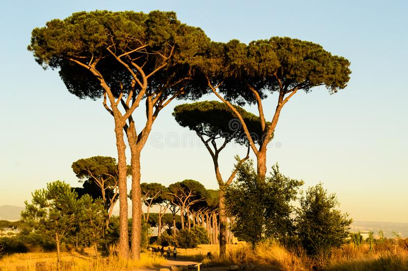 Trees in the ancient Rome during the sunset stock photo
