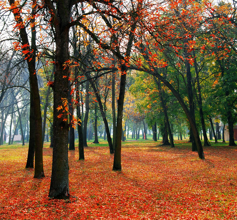 Free Trees And Leaves Stock Photo - 4549560