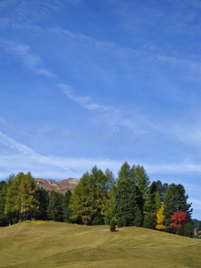 Free Trees And Sky Royalty Free Stock Photos - 5018228