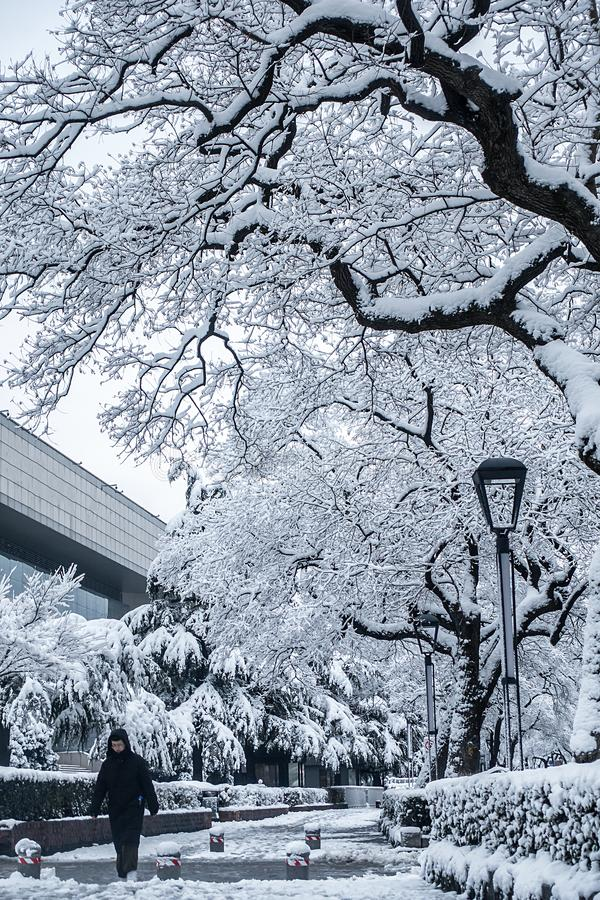 Free Trees And Streets Covered By Snow Stock Image - 141240411