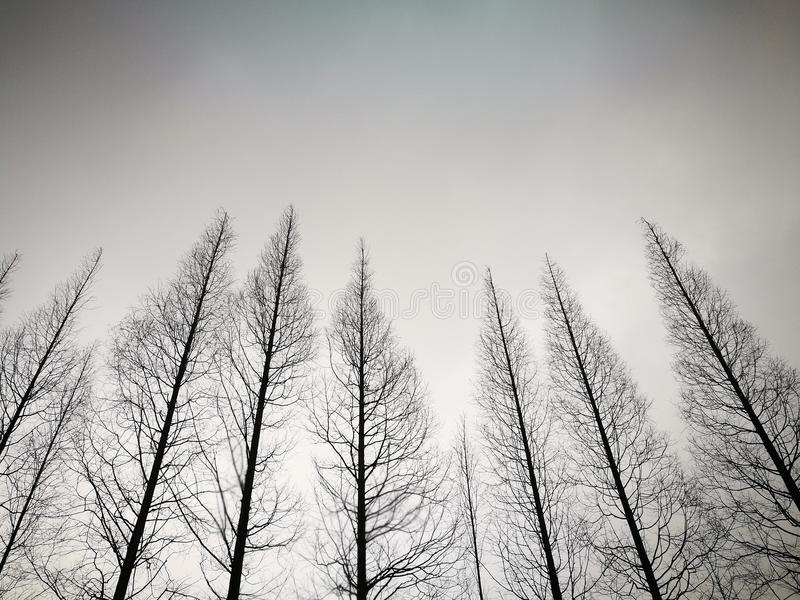 Trees without any leaf standing under the cloud. Within a cloudy day royalty free stock image