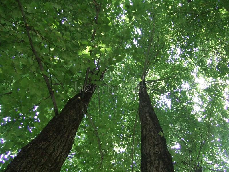 Naturetherapy. Trees as an object of dealing with stress, look up, nature heals everything royalty free stock images