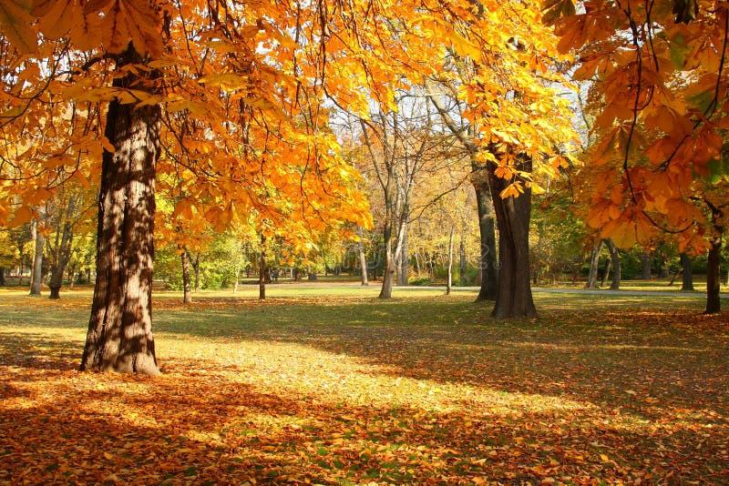 Trees in autumn royalty free stock photo