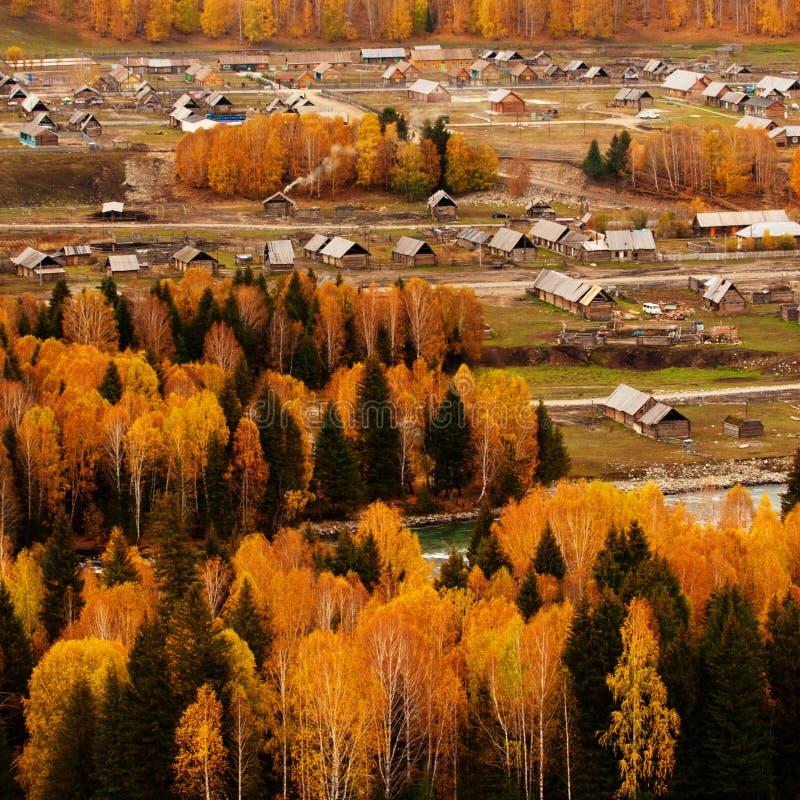 The trees in autumn stock photos