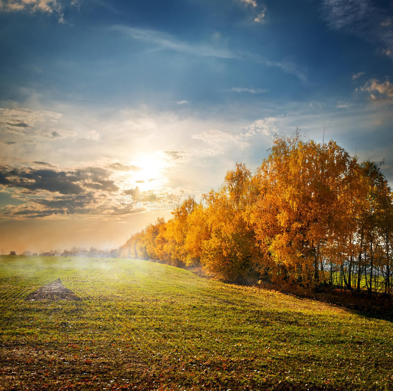 Trees in the autumn field royalty free stock images