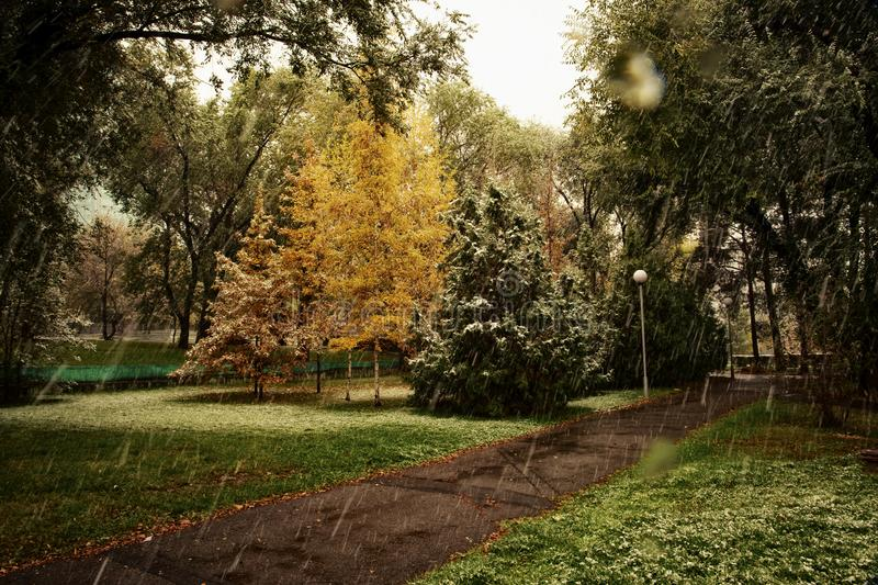 Trees in the park in the fall. Trees in autumn park in the rain royalty free stock photography