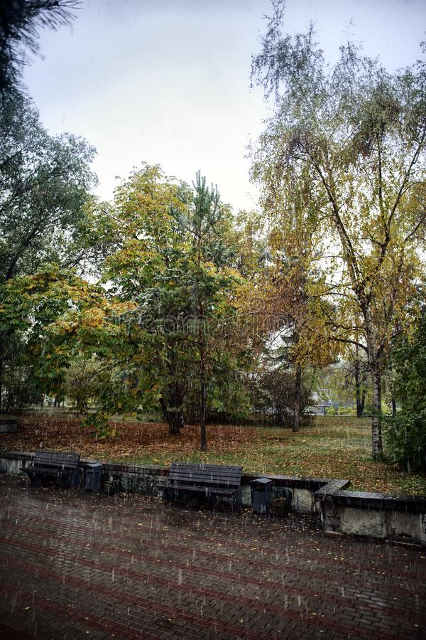 Trees in the park in the fall. Trees in autumn park in the rain royalty free stock photo