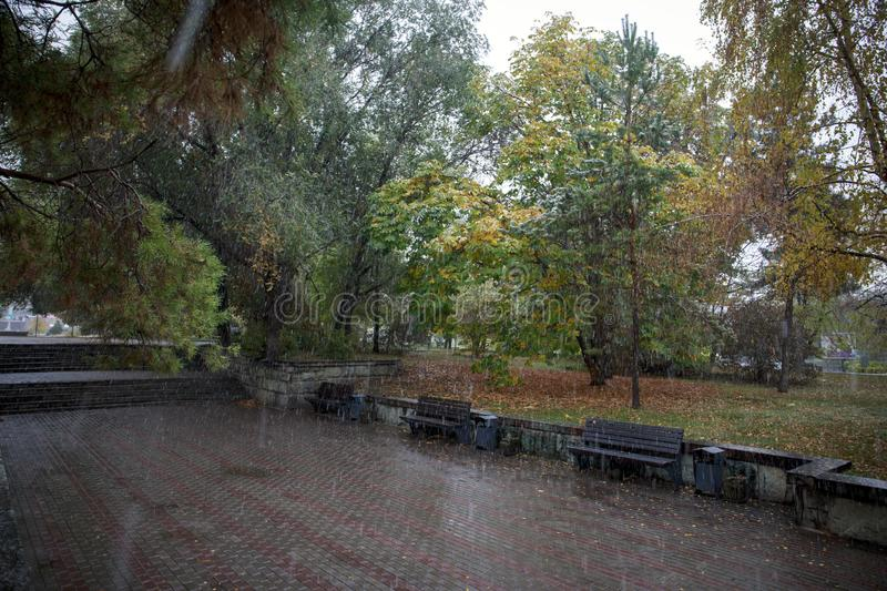 Trees in the park in the fall. Trees in autumn park in the rain stock image