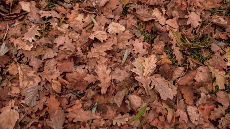 Trees in autumn park stock photo